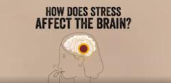 Op welke manier heeft stress effect op jouw brein?